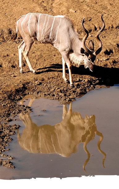 Okosongoro Jagd Namibia