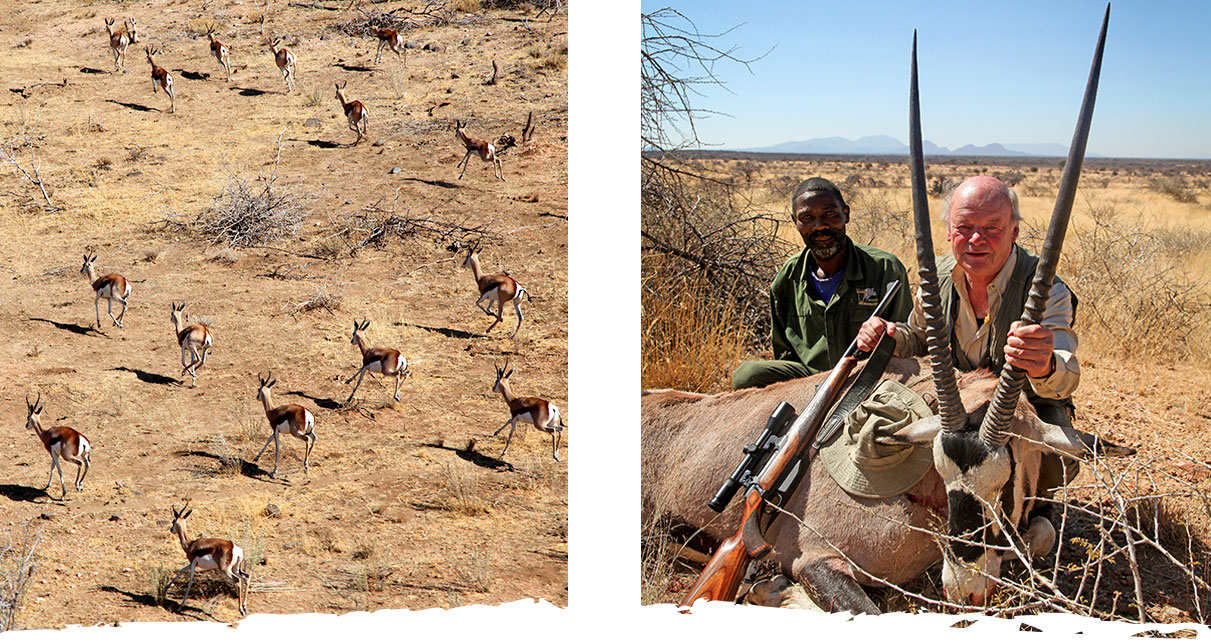 Trophäenjagd auf der Gästefarm Okosongoro Namibia - Jagdreise