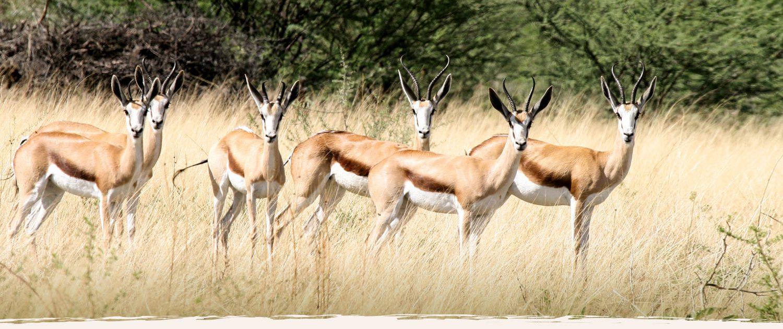 Okosongoro Tierreichtum Namibia