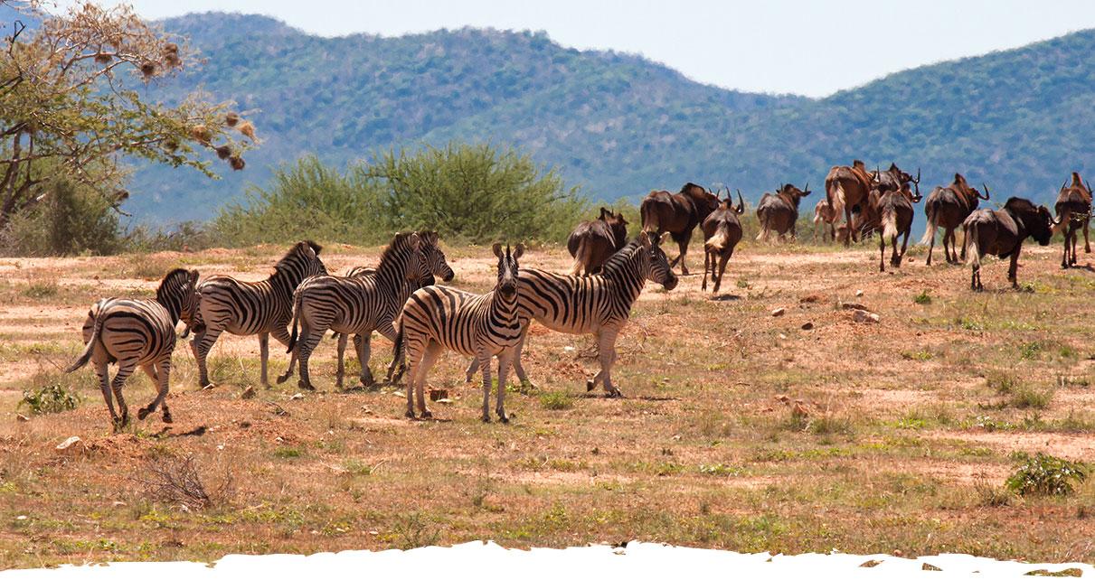 Okosongoro Unterkunft- Wildbeobachtung Namibia