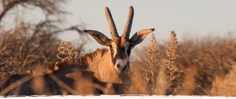 Jagdreisen und Safari Erlebnisse in Namibia