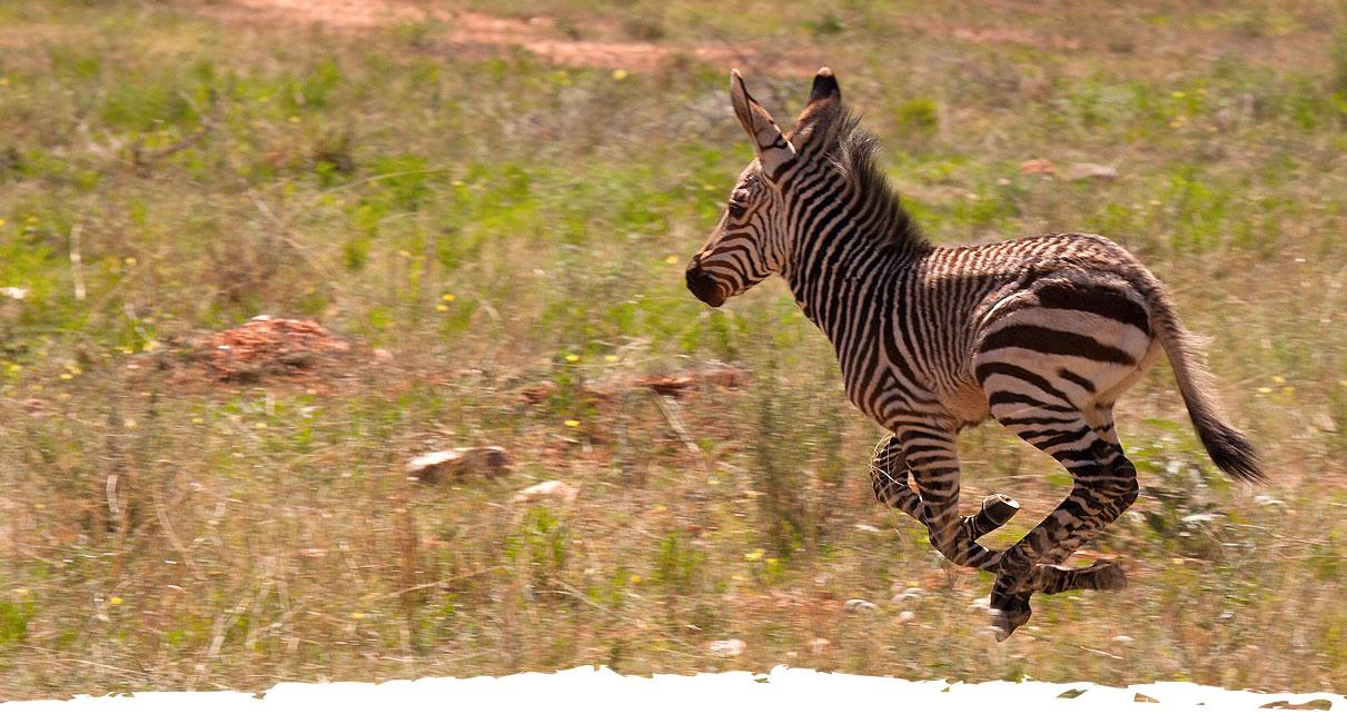 Jagd und Gästefarm Okosongoro - Wissenswertes Namibia