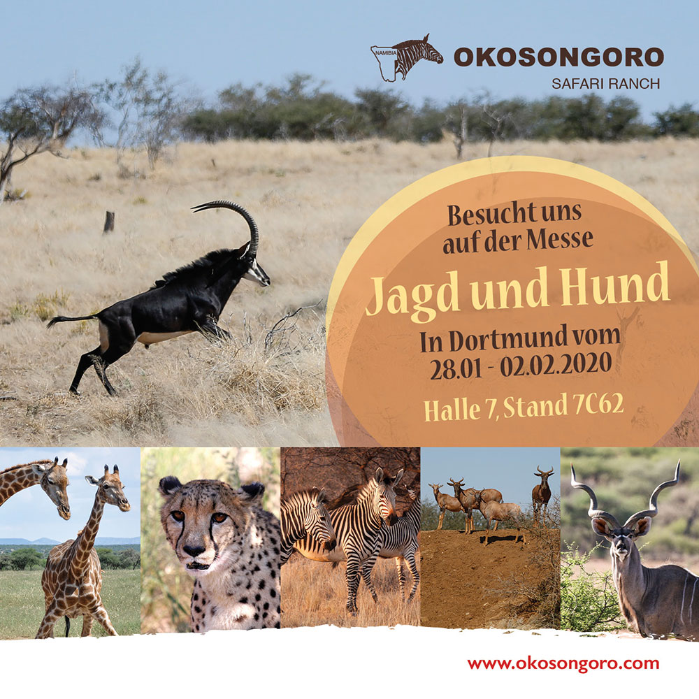Okosongoro Jagdfarm Namibia auf der Jagd und Hund Dortmund